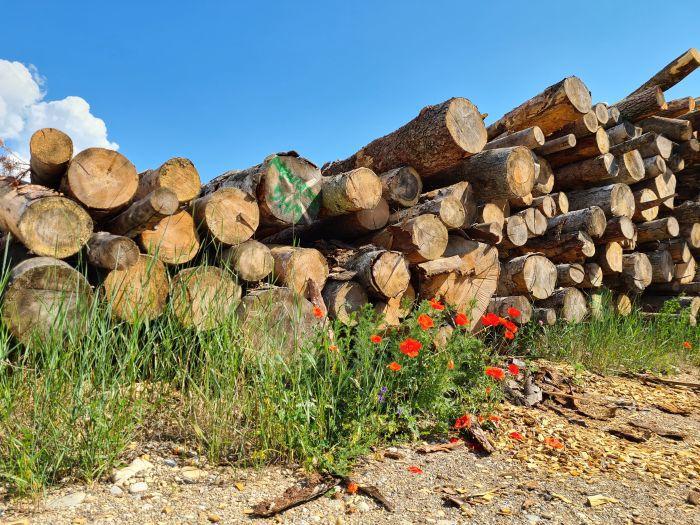 Mohn Holz Hackgut 700 x 525